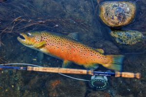 , Trout Smart Series: Brown Trout – Fly of the Month Club