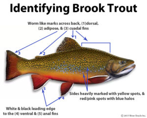 Trout Smart Series: Brook Trout – Fly of the Month Club