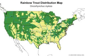 , Trout Smart Series: Rainbow Trout – Fly of the Month Club