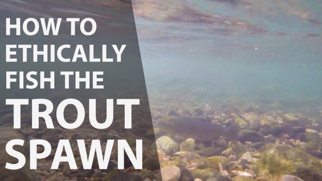 How to ethically fish the trout spawn
