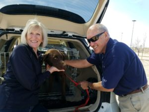 , Wambolt in the Community: Safe Harbor Lab Rescue gives dogs a fresh start