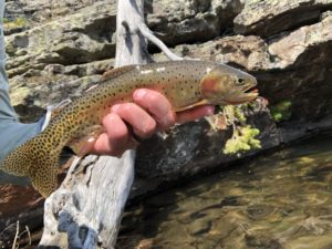 """, """"Simplifly"""" Your Boxes: Top 20 Colorado Trout Patterns"""