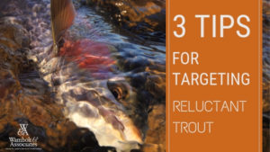, 3 Tips for Targeting Reluctant Trout